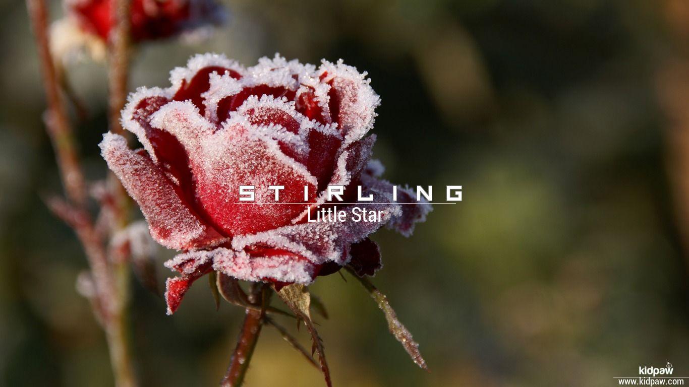 Stirling beautiful wallper