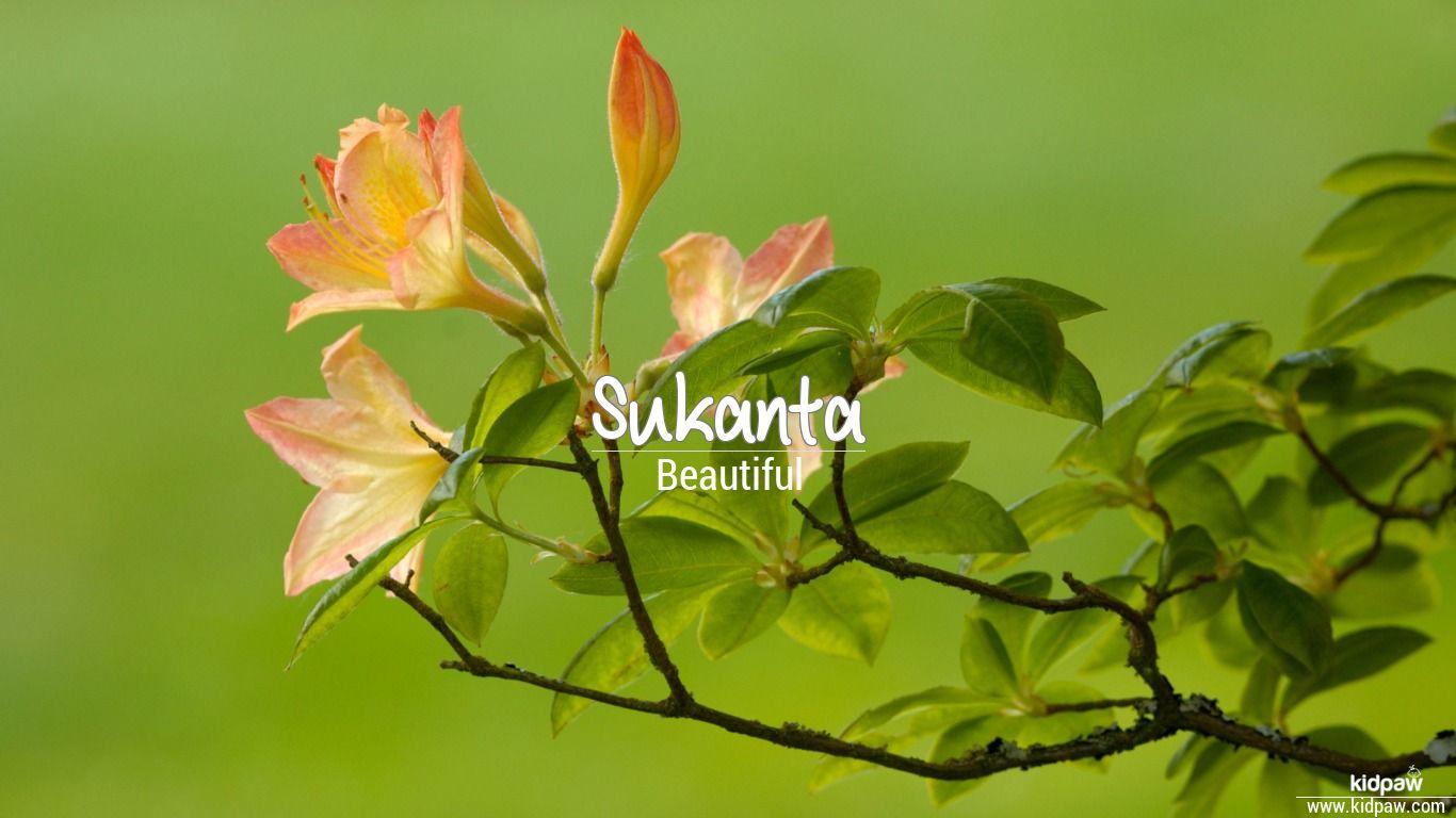 Sukanta beautiful wallper