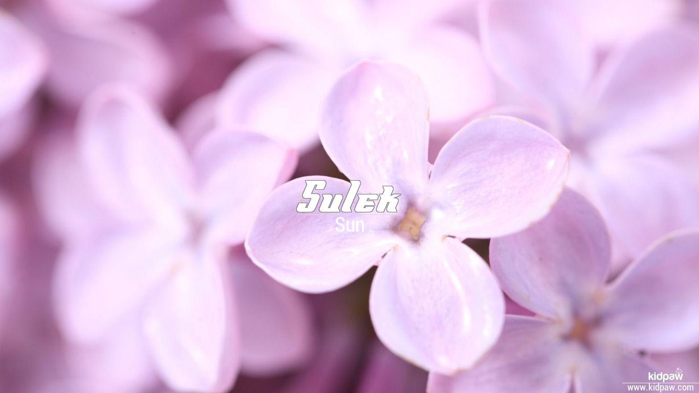 Sulek beautiful wallper
