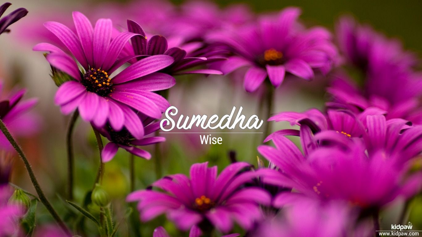 Sumedha beautiful wallper