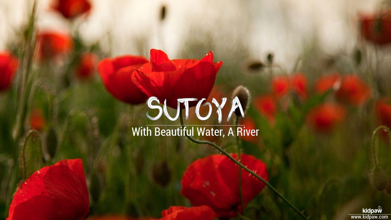 Sutoya beautiful wallper