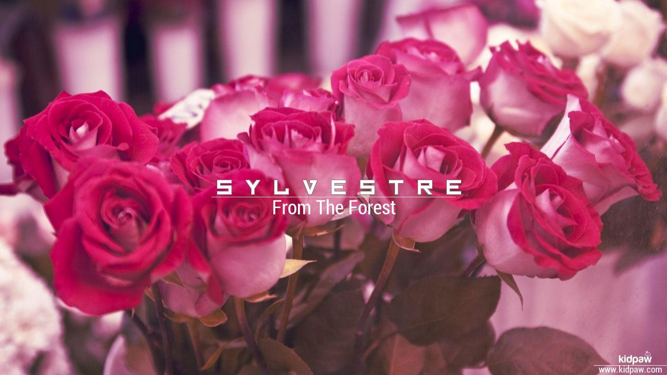 Sylvestre beautiful wallper