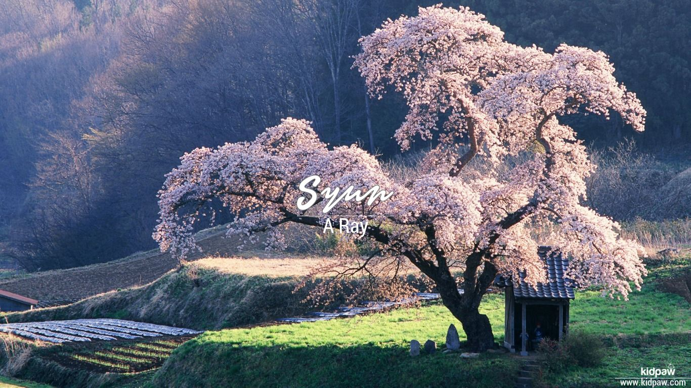 Syun beautiful wallper