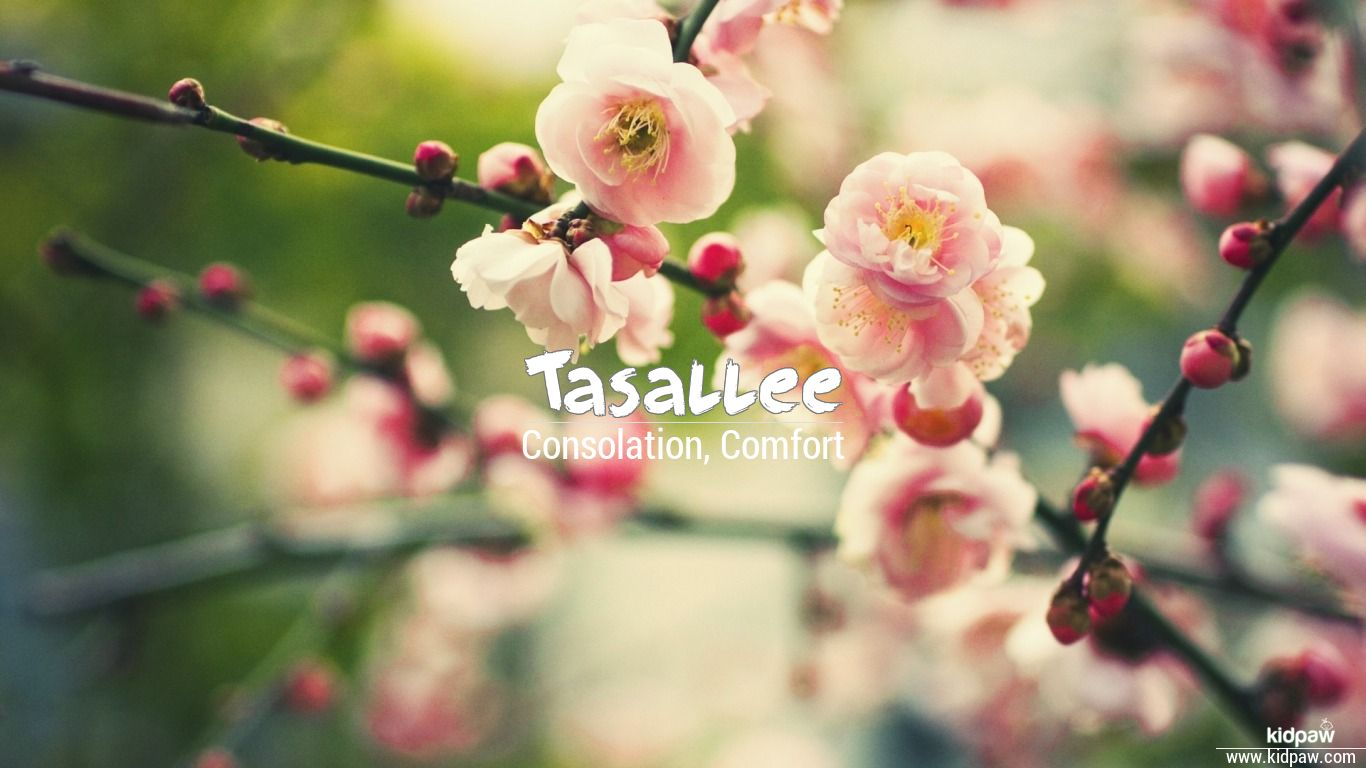 Tasallee beautiful wallper