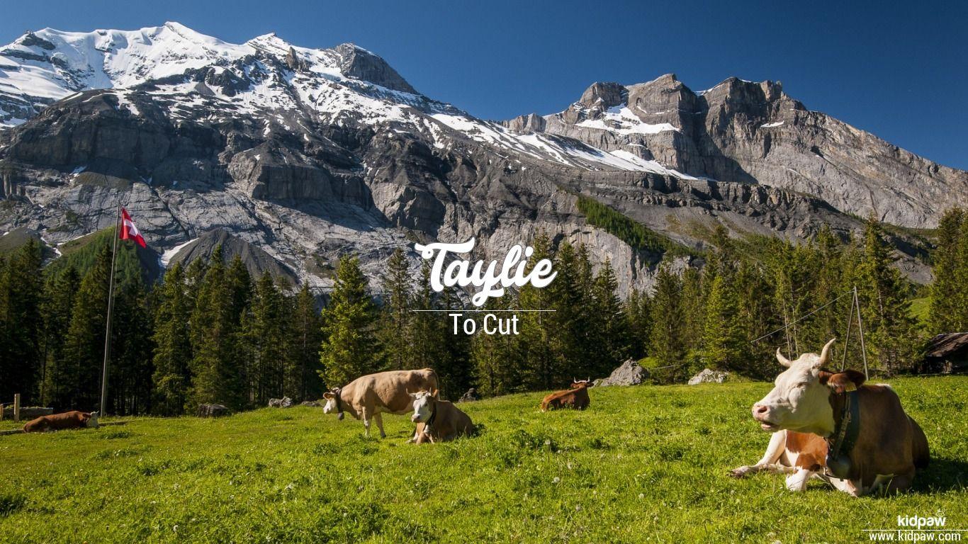 Taylie beautiful wallper