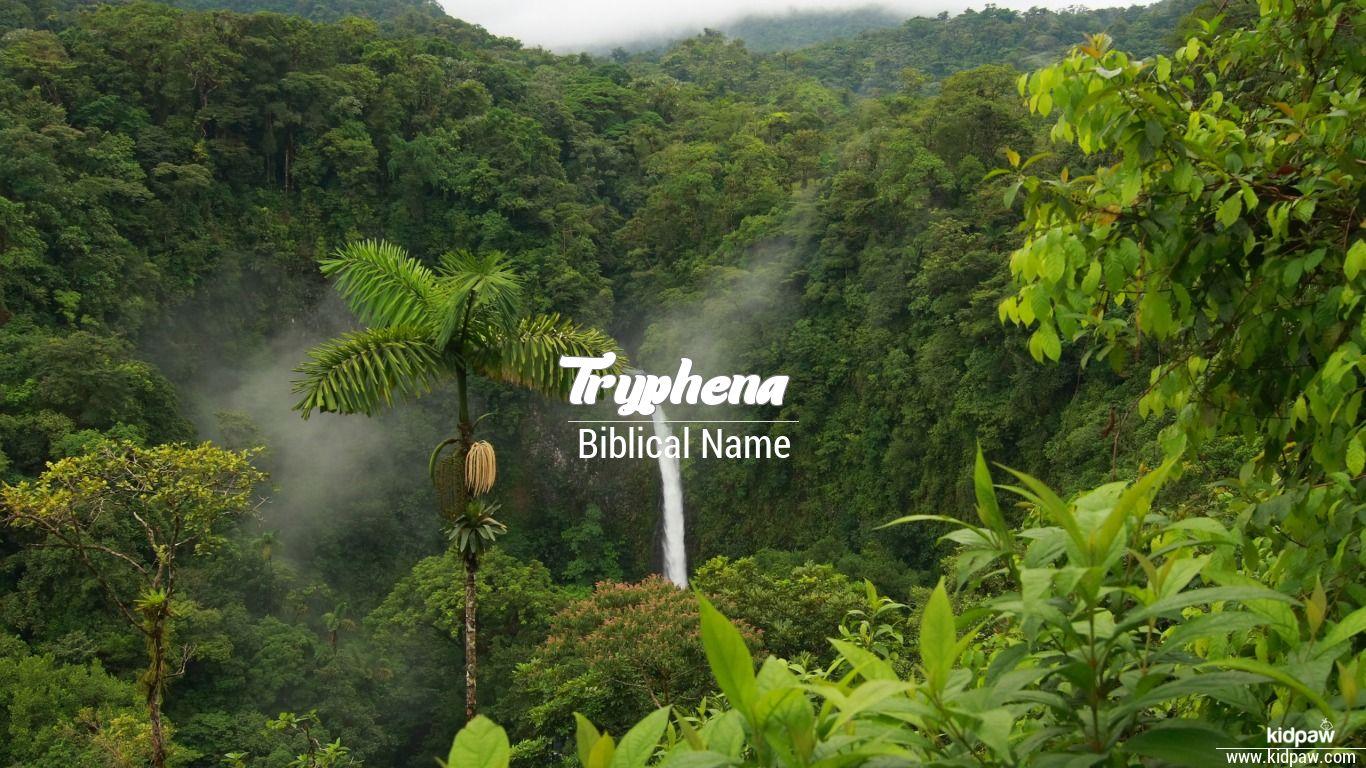 Tryphena beautiful wallper