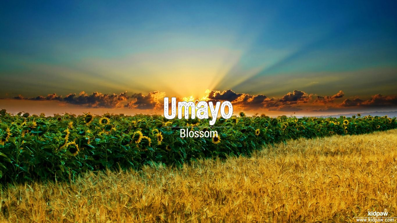 Umayo beautiful wallper