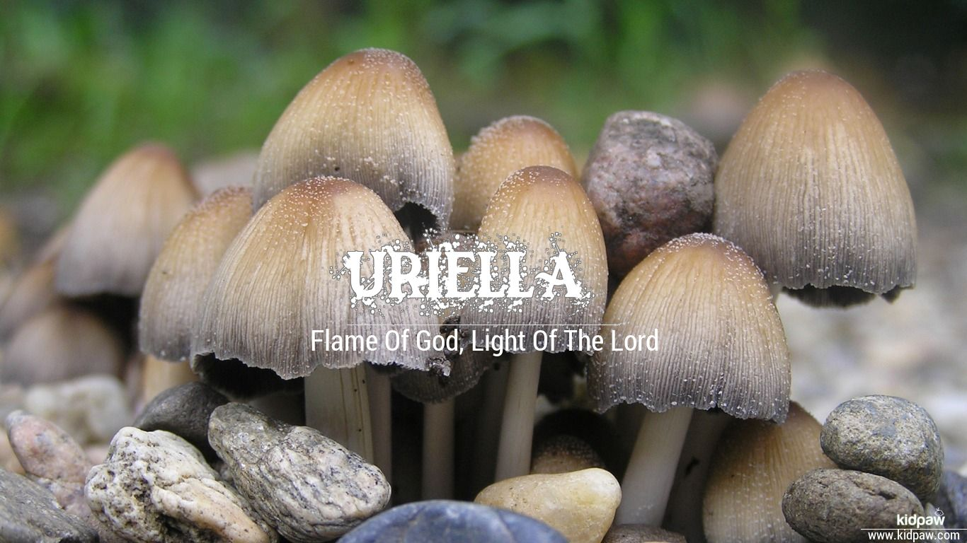 Uriella beautiful wallper