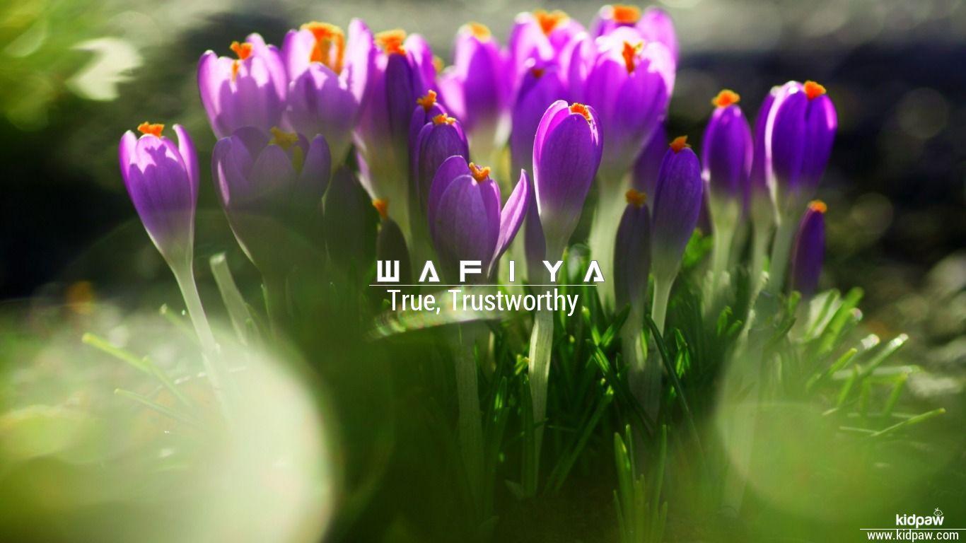 Wafiya beautiful wallper
