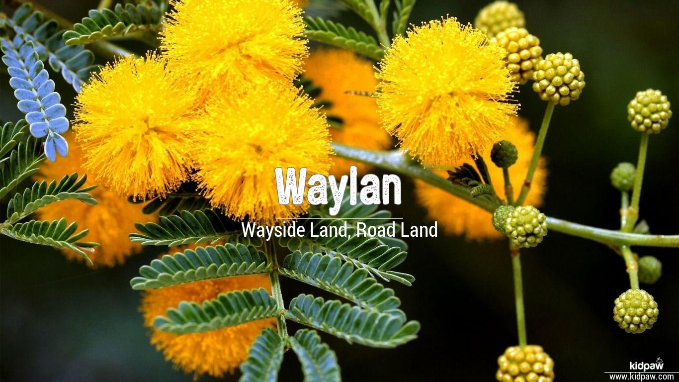 Waylan beautiful wallper