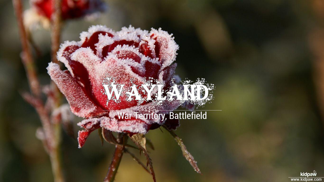 Wayland beautiful wallper