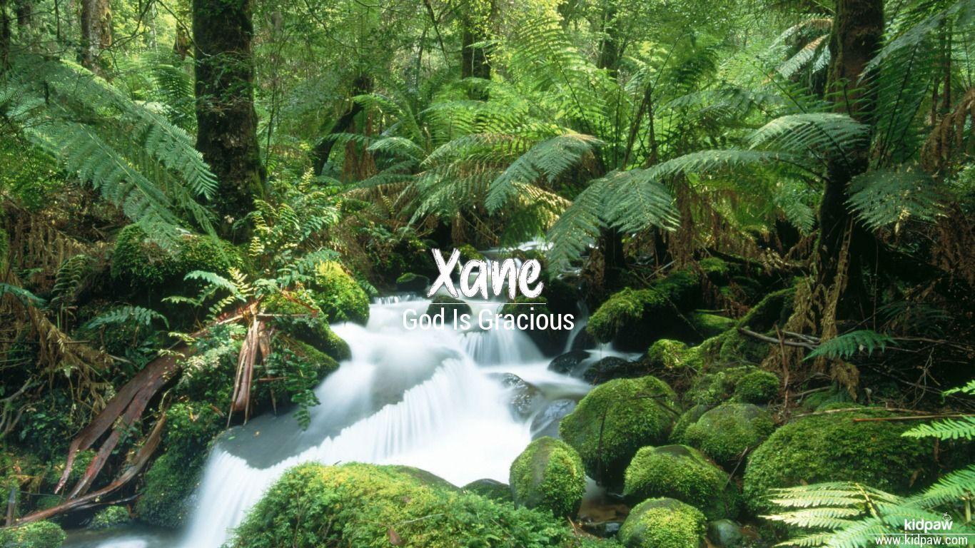 Xane beautiful wallper