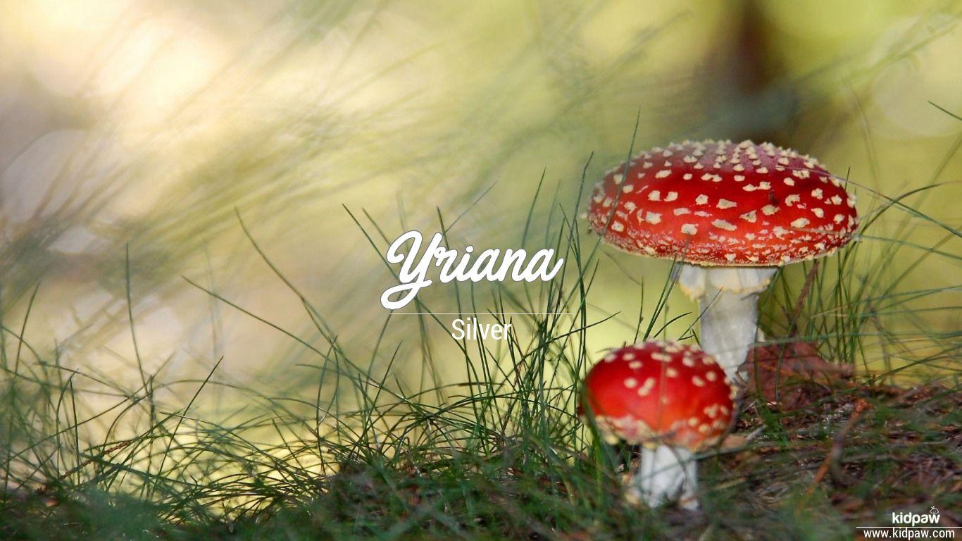 Yriana beautiful wallper