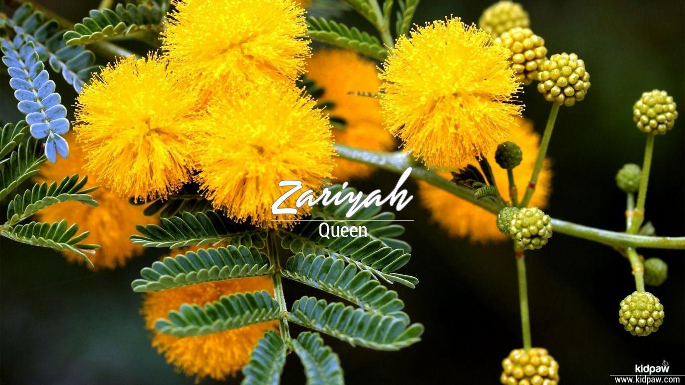 Zariyah beautiful wallper