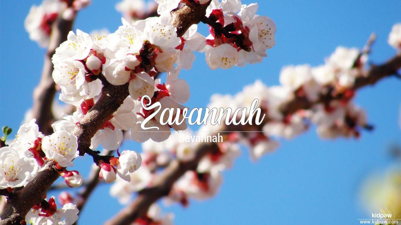 Zavannah beautiful wallper