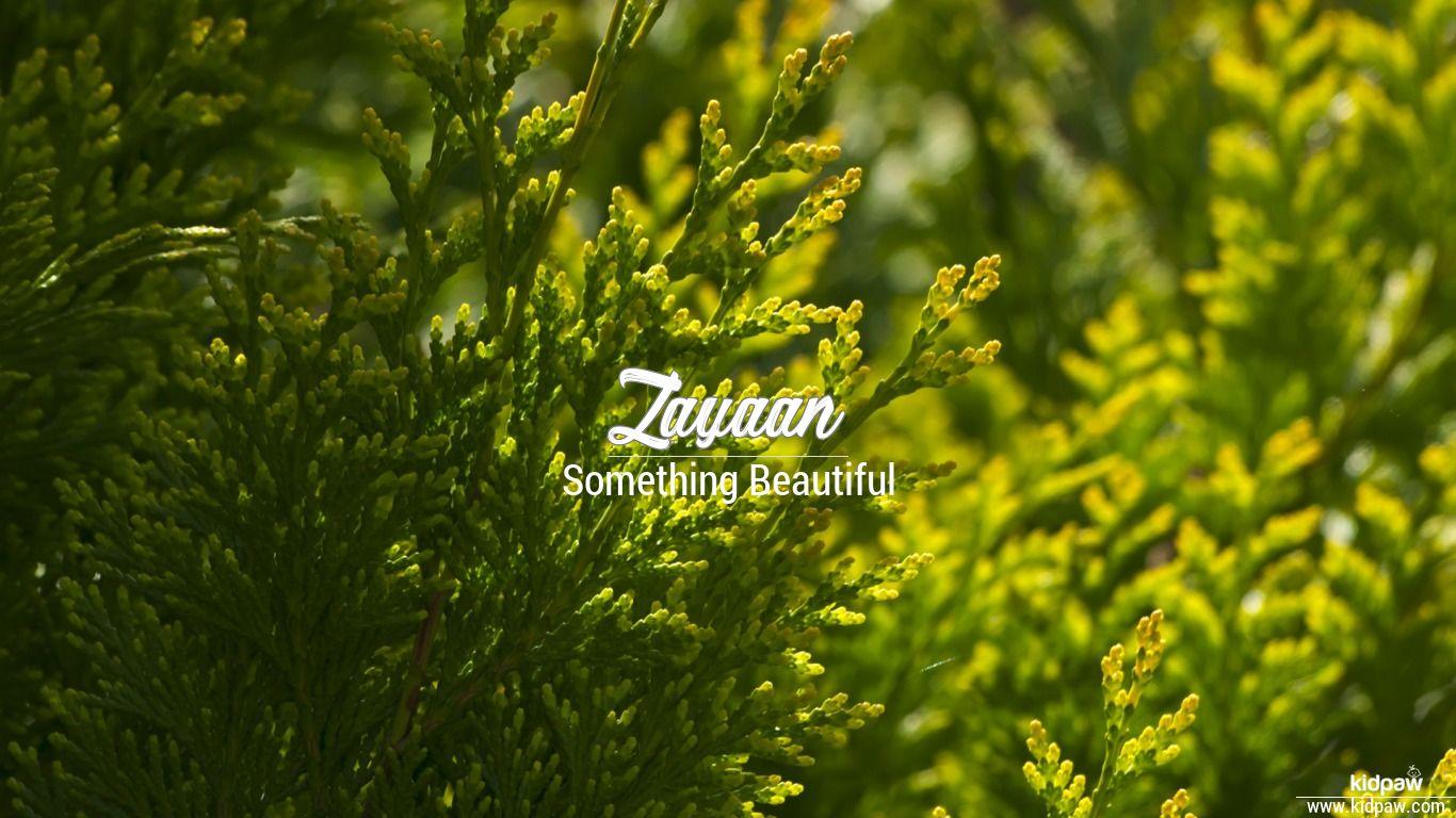 زیاں Zayaan Name Meaning In Urdu Arabic Names For Girls