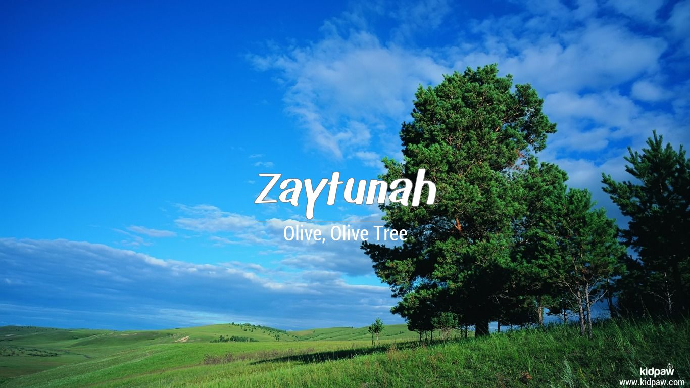 Zaytunah beautiful wallper