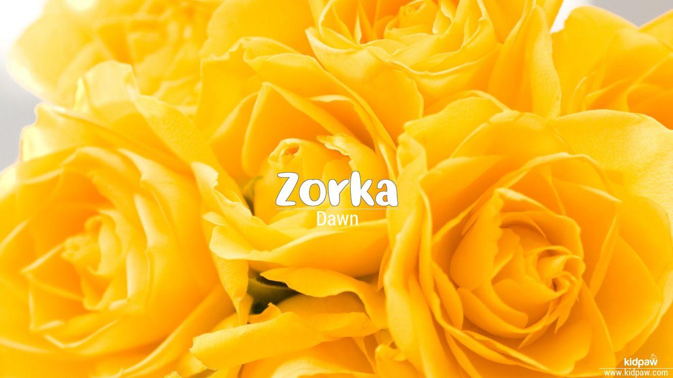 Zorka beautiful wallper