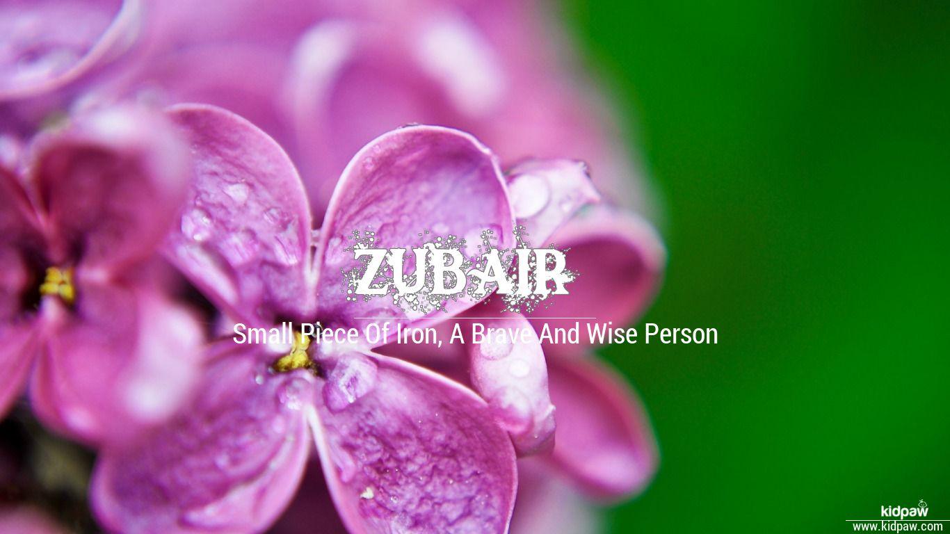 زبیر | Zubair Name Meaning in Urdu, Arabic names for Boys
